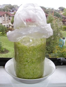 Sauerkraut fermenting on our window sill
