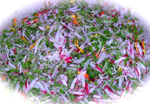 Chad's Red Radish and Microgreen Salad