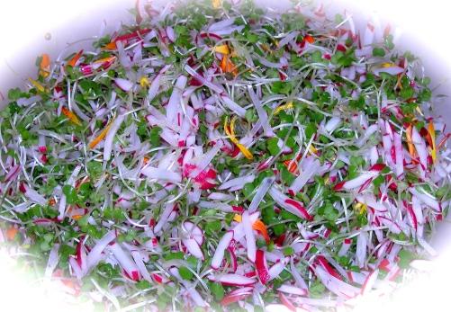 Chad's Red Radish and Microgreen Salad