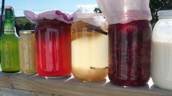 Fermented foods variety